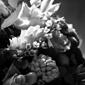 Do's en Dont's bij bloemen